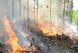 Thừa Thiên - Huế dập tắt vụ cháy 2 ha rừng thông