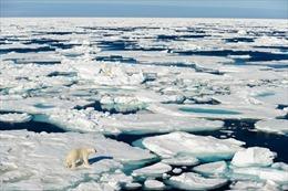 Cảnh báo các di chỉ khảo cổ ở Bắc Cực đang chìm dần