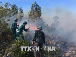 Nắng nóng gay gắt, cháy rừng thông lan rộng tại Nghệ An