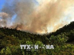 Cháy lớn thiêu rụi gần 10 ha rừng trồng ở Thanh Hóa