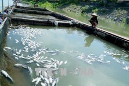 Cá lồng trên Sông Đà chết hàng loạt do xả lũ