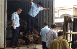 Khởi tố hình sự vụ buôn lậu lớn tại cảng Cát Lái