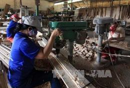 Quy định tạm ngừng kinh doanh tạm nhập, tái xuất gỗ tròn, gỗ xẻ