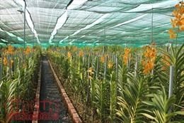 Festival hoa lan 2019 sẽ diễn ra tại Công viên Tao Đàn TP Hồ Chí Minh