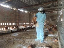 Thêm một trường hợp tử vong do cúm A/H1N1 tại Trà Vinh
