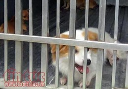 TP Hồ Chí Minh ra quân xử lý chó thả rông trên địa bàn trung tâm
