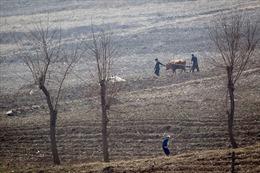 10 triệu người Triều Tiên đối mặt nguy cơ thiếu lương thực sau vụ mùa thất bát