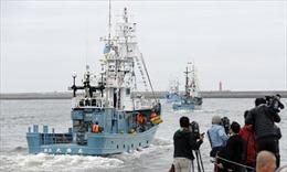 Nhật Bản dong buồm ra khơi đánh bắt cá voi thương mại lần đầu tiên sau hơn 30 năm