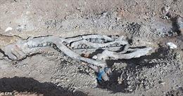 Phát hiện kinh ngạc cây hóa thạch 20 triệu năm tuổi còn nguyên cả cành, rễ