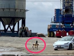 Video SpaceX đưa chó robot điều tra xác tàu vũ trụ nổ tung