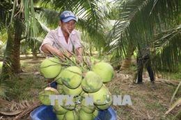 Bến Tre cần chú trọng phát triển nông nghiệp công nghệ cao