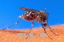 Virus Tây sông Nile bùng phát tại vùng Đông Bắc Italy và thủ đô Hy Lạp