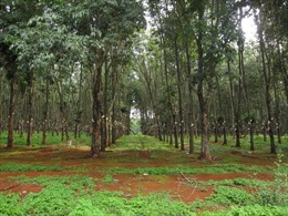 Điều chỉnh quy hoạch sử dụng đất tỉnh Đắk Lắk
