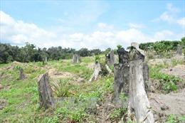 Hàng trăm ha xâm chiếm Vườn Quốc gia Bù Gia Mập được dân trả lại