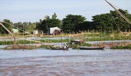 Đồng bằng sông Cửu Long mùa nước nổi - Bài 1: Ứng phó với lũ sớm
