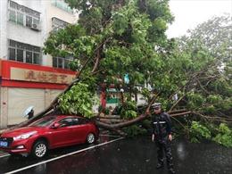 Siêu bão Mangkhut khiến giao thông công cộng tại Quảng Đông (Trung Quốc) tê liệt