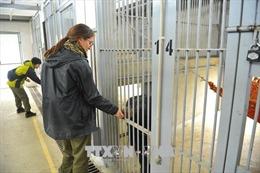 Xử lý mạnh tay với tội phạm buôn bán động vật hoang dã