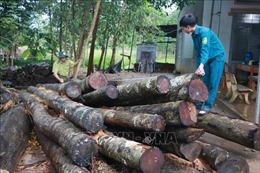 Khẩn trương điều tra vụ phá rừng nghiêm trọng tại Bình Phước