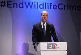 Các nước nỗ lực chống buôn bán trái phép động vật hoang dã