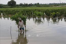 Lũ thượng nguồn Đồng bằng sông Cửu Long đang giảm