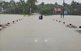 Thừa Thiên - Huế: Nhiều diện tích rau màu bị hư hại do úng ngập