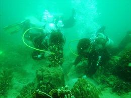 Phục hồi, tái tạo rạn san hô phục vụ du lịch sinh thái biển