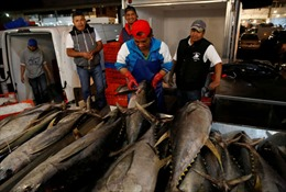 Mexico thua Mỹ trong vụ kiện dán nhãn cá ngừ 'dolphin safe'