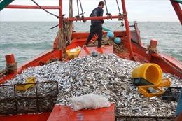 Luật Thủy sản 2017 sắp có hiệu lực - Bài 1: Nguy cơ cạn kiệt nguồn tài nguyên biển