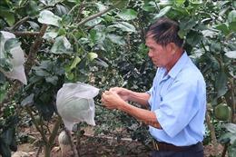 Cựu chiến binh tiên phong đưa khoa học công nghệ phát triển vườn cây đặc sản