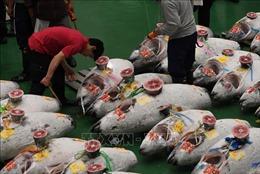 Con cá ngừ khổng lồ có giá 3,1 triệu USD tại Nhật