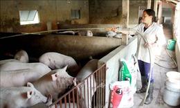 CPTPP: Áp lực lớn với ngành chăn nuôi