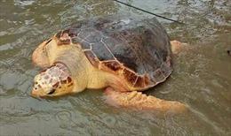 Thả cá thể rùa xanh quý hiếm về biển