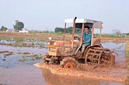 Nông dân đồng loạt xuống đồng sản xuất vụ Đông