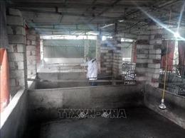 Quảng Ninh cấp bách phòng chống dịch tả lợn châu Phi
