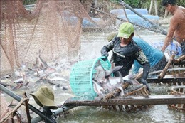 Cơ hội bứt phá cho xuất khẩu cá tra - Bài 2: Vẫn còn những rào cản ở phía trước