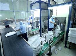 Nhu cầu yếu khiến giá gạo Ấn Độ và Việt Nam đi xuống