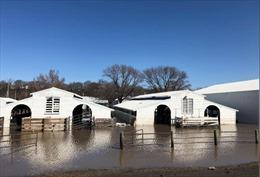 Mỹ: Lũ lụt tràn về vùng Trung Tây, đe dọa 2 bang Missouri và Kansas