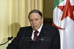 Algeria bổ nhiệm chính phủ lâm thời