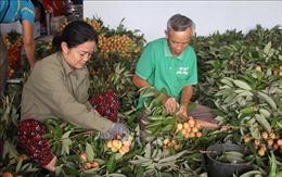 Nông dân Bắc Giang vui mùa vải sớm
