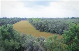 Hấp dẫn điểm du lịch Khu bảo tồn sinh thái Đồng Tháp Mười