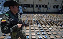 Báo động tình trạng tăng sản lượng cocaine toàn cầu