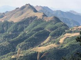 Đỉnh núi Mẫu Sơn không xuất hiện mưa tuyết như mạng xã hội đưa tin