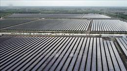 Nhà máy điện mặt trời Sao Mai Solar PV1 đi vào hoạt động