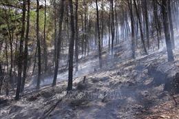 Thừa Thiên - Huế huy động hơn 1.000 người dập tắt đám cháy rừng thông