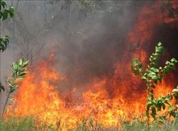 Thừa Thiên - Huế: Cơ bản khống chế được đám cháy rừng ởvùng Bàu Co
