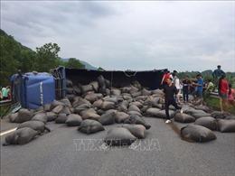 Xe tải chở chè bị lật gây ách tắctrên cao tốc Nội Bài - Lào Cai