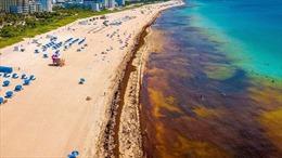 Thảm họa môi trường từ tảo đuôi ngựa