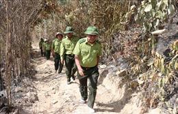 Cục Kiểm lâmkiểm tra công tác phòng chống cháy rừng tạiPhú Yên