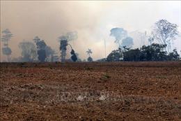 Brazil cân nhắc các đề nghị hỗ trợ dập cháy rừng Amazon