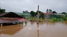 Mưa lũ gây ngập lụt diện rộng, hư hỏng nhiều lúa và hoa màu tại Quảng Trị